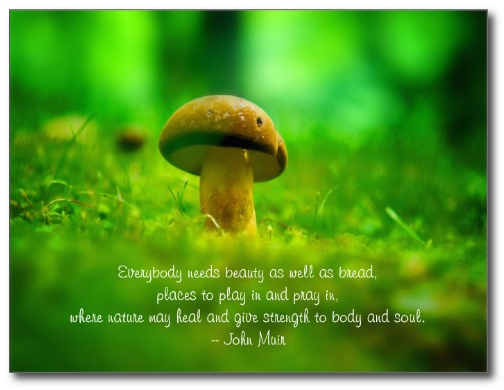 Mushroom Green Meadow Forest Nature Heal Strength Post Cards