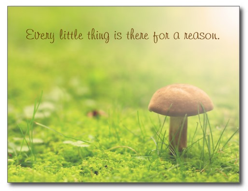 Mushroom Sunlight Green Forest There for a Reason Card