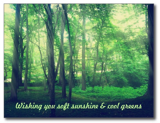 Refreshing Forest Patch Tree Green Leaves Sunlight Postcards
