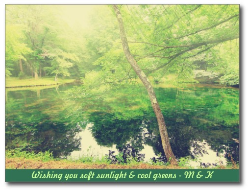 Lovely Little Pond Lush Green Tree Leaves Sunlight Post Cards