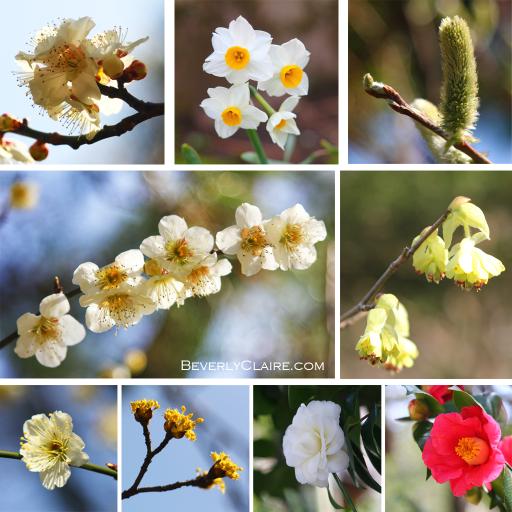 Flowers at Sankeien in spring