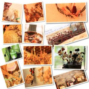 beverlyclaire_kitakaruizawa-chourevere-herbs_1150