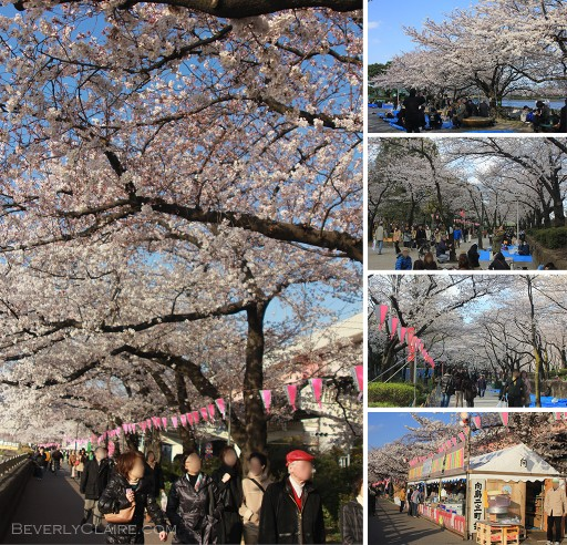 Hanami season at Sumida Park