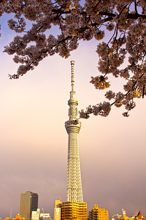 Tokyo Sky Tree at dusk, as seen from Sumida Park