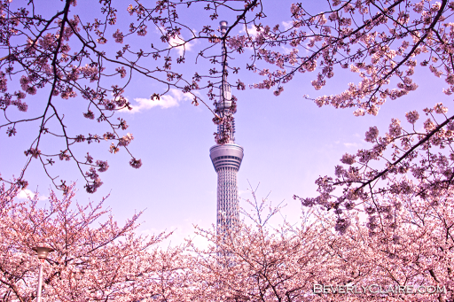 Tokyo Sky Tree peeking through the cherry blossoms