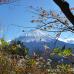 It's Autumn: Koyodai-Tenbodai in Yamanashi