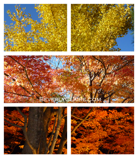 Autumn leaves at Yamanashi, taken in early November last year.  山梨県の紅葉、昨年の11月撮影。